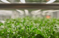 How vertical farming tech could bring fresh greens to the world's food deserts